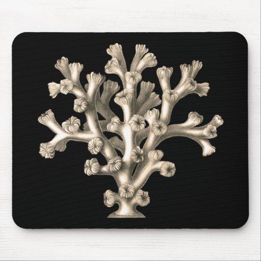Lophohelia - Coral Mouse Pads