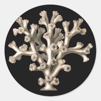 Lophohelia - Coral Sticker