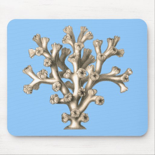 Lophohelia - coral tapetes de ratón