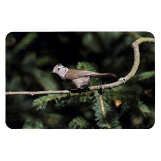 Lophophanes cristatus rectangular photo magnet