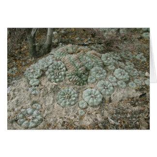 Lophophora williamsii - Peyote Greeting Card