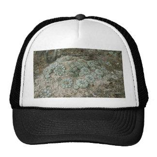 Lophophora williamsii - Peyote Trucker Hat