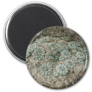 Lophophora williamsii - Peyote 2 Inch Round Magnet