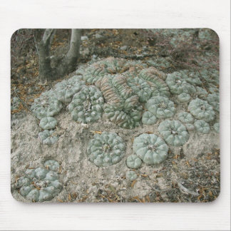 Lophophora williamsii - Peyote Mouse Pad