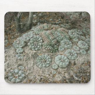 Lophophora williamsii - Peyote Mouse Pad