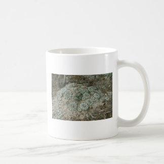 Lophophora williamsii - Peyote Classic White Coffee Mug