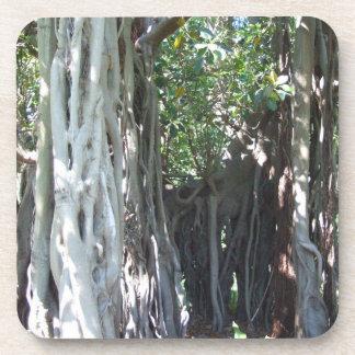 Lord Howe Island Fig Tree Coaster