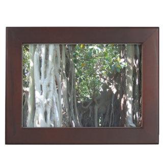 Lord Howe Island Fig Tree Keepsake Box