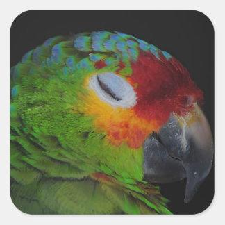 Lored rojo el Amazonas que guiña al pegatina del
