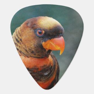 lorikeet-10.jpg guitar pick