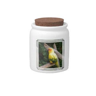 Lorikeet Candy Jar