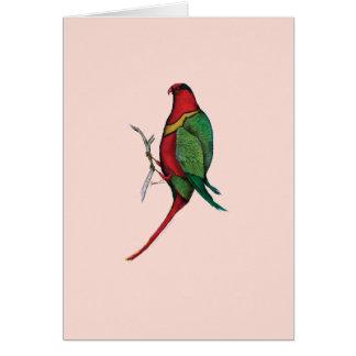 lorikeet de la duquesa, fernandes tony tarjeta de felicitación