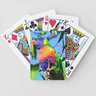 lorikeet del arco iris baraja de cartas