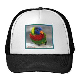 Lorikeet Eye Trucker Hat