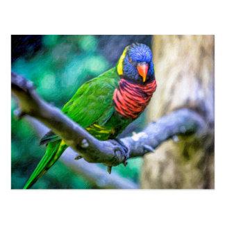 Lorikeet Parrot Oil Art Original Photography Postcard