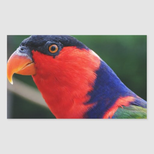 Lorikeet Pegatina Rectangular