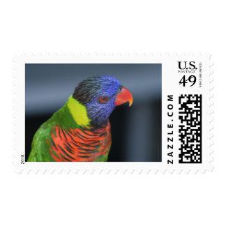 Lorikeet Postage Stamps