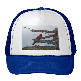 Lorikeet Trucker Hat
