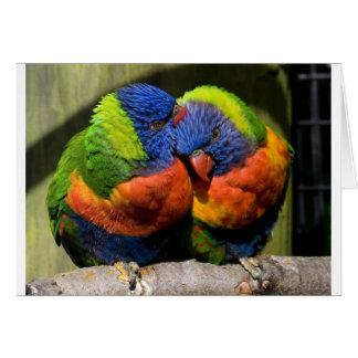 Lorikeets en amor tarjeta de felicitación