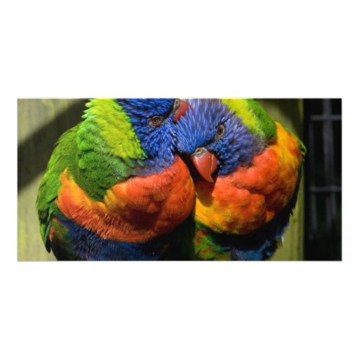 Lorikeets in Love Customized Photo Card