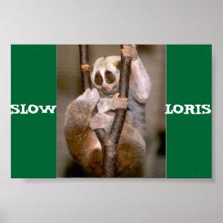 Loris lento póster