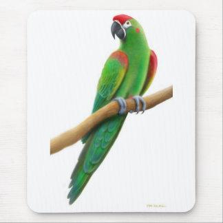 Loro afrontado rojo Mousepad del Macaw