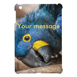 loro azul lindo del Macaw del jacinto del mini