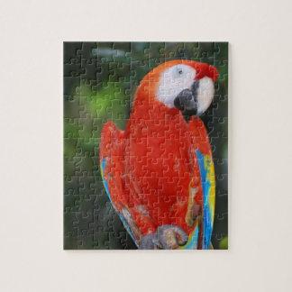 Loro coloreado brillante puzzles con fotos