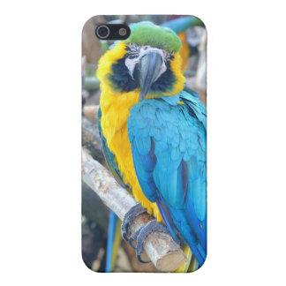 Loro colorido - caso de Iphone 5 iPhone 5 Cárcasa