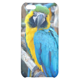 Loro colorido - caso de Iphone 5C