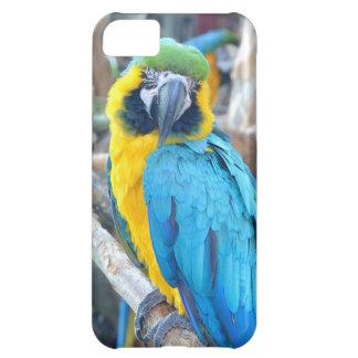 Loro colorido - caso del iPhone 5 Funda iPhone 5C