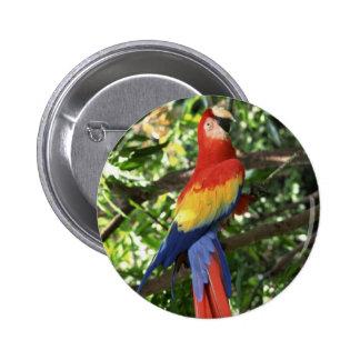 Loro colorido del Macaw Pin
