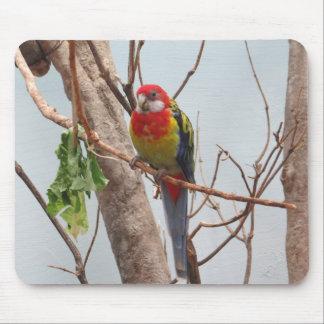 Loro colorido del Macaw Alfombrilla De Ratones