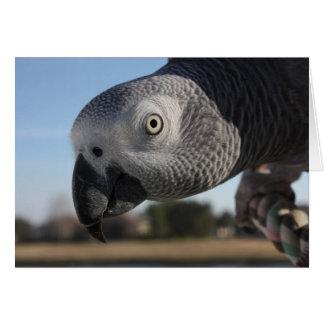 Loro curioso del gris africano de Congo Tarjeta De Felicitación