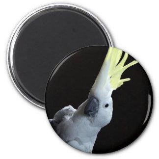 Loro de Cockatoo Imán Redondo 5 Cm