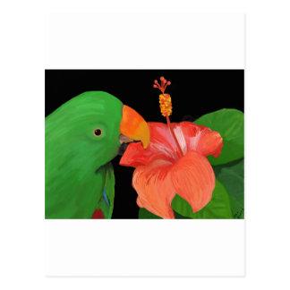 Loro de Eclectus y flor del hibisco Tarjeta Postal