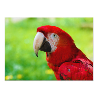 """Loro del americano de Macao del Ara del Macaw del Invitación 5"""" X 7"""""""