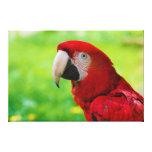 Loro del americano de Macao del Ara del Macaw del  Impresión De Lienzo