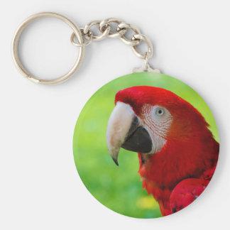 Loro del americano de Macao del Ara del Macaw del Llaveros Personalizados