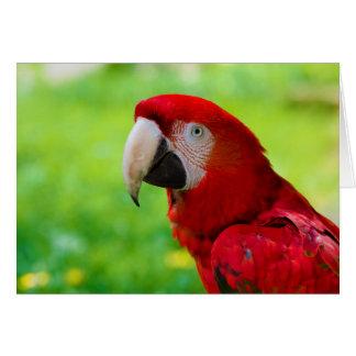 Loro del americano de Macao del Ara del Macaw del Tarjeta De Felicitación