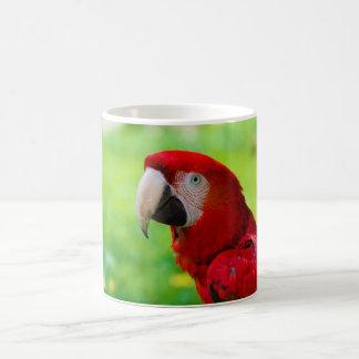 Loro del americano de Macao del Ara del Macaw del Taza Clásica
