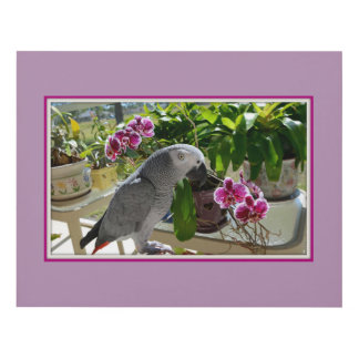 Loro del gris africano con las orquídeas cuadro