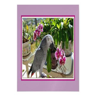 Loro del gris africano con las orquídeas invitaciones magnéticas