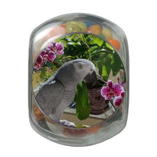 Loro del gris africano con las orquídeas jarrones de cristal