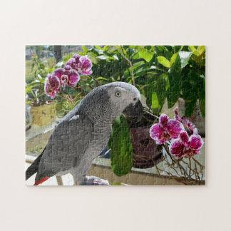 Loro del gris africano con las orquídeas rompecabezas