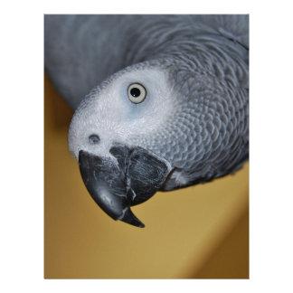 Loro del gris africano de Congo hola Membrete