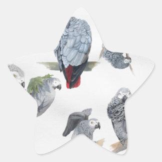 Loro del gris africano Exclusiva diseñada por Gri