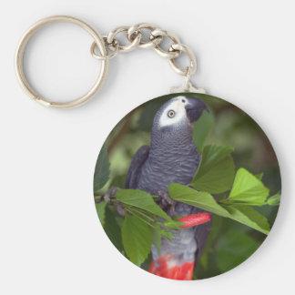 Loro del gris africano llaveros