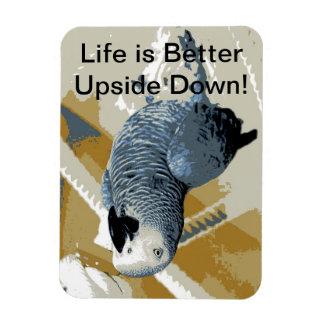 Loro del gris africano que cuelga upside-down imán flexible