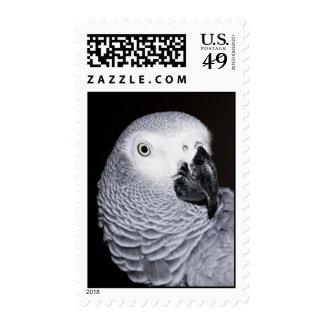 Loro del gris africano sellos